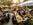 Canada Biergarten, Brauerei und Bühne in Obermauerbach, Aichach, Bayern - Feiern, Konzerte, Kleinkunst und original bayrisches Weißbier
